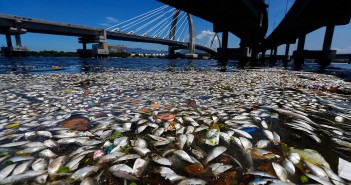 Dead fish float on the surface of Guanabara Bay in Rio de Janeiro on 24 February 2015 (Ricardo Moraes/Reuters)